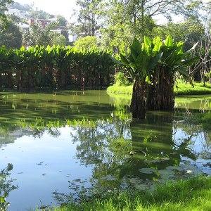 Ботанический и Зоологический сад Цимбазаза