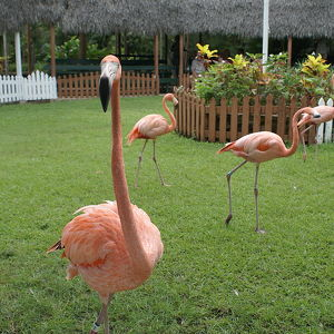 Сад Ардастра, зоопарк и Центр охраны природы
