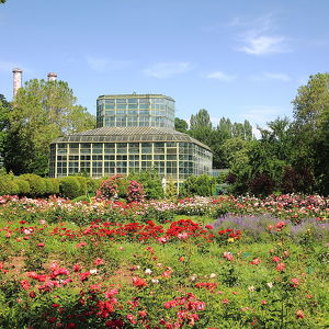 Bucharest Botanical Garden