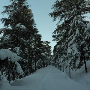 Théniet El Had National Park