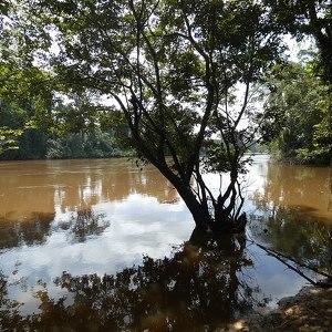 Cavalla River